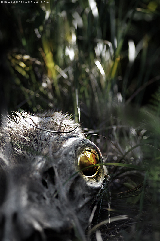 deer skull desaturated 800 px url.jpg