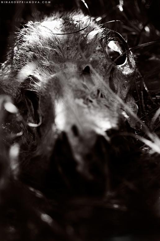 deer skull 3 duo 775 px url.jpg