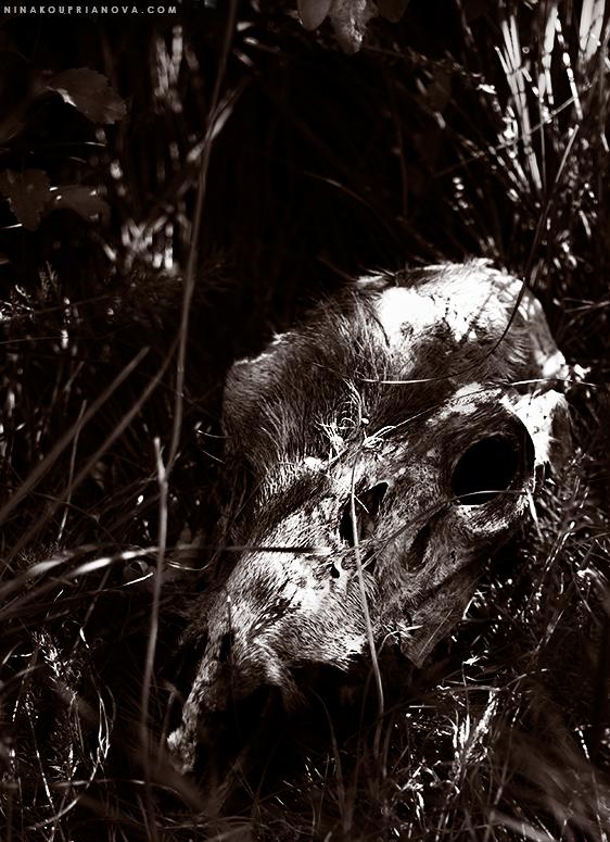 deer skull 4 duo 775px url.jpg