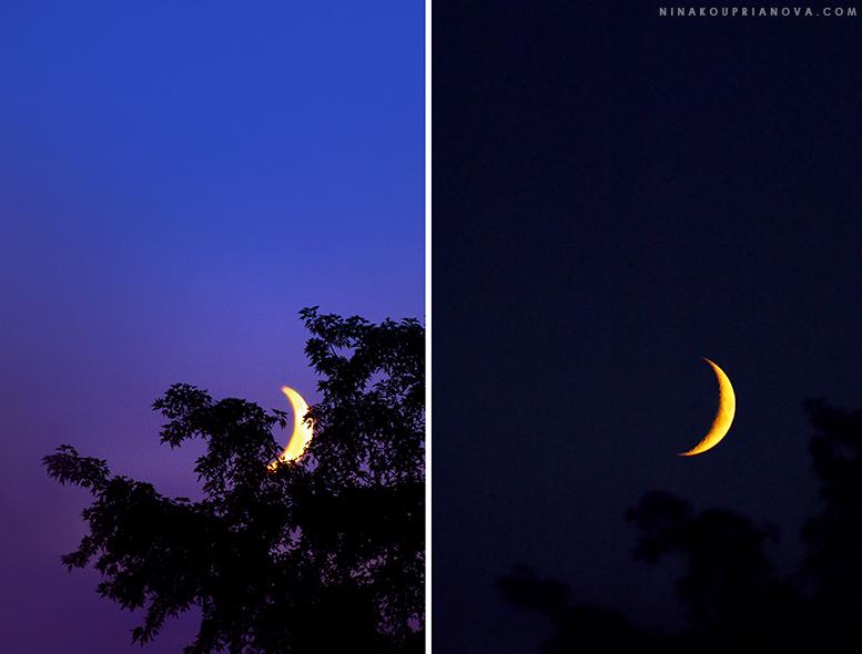 moon in trees august 10 combined 777 px url.jpg