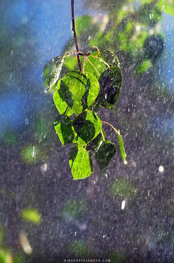 leaves in water 900 px url.jpg