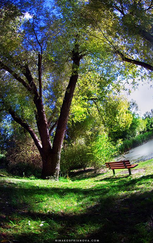 bench solitude summer 1 800 px url.jpg