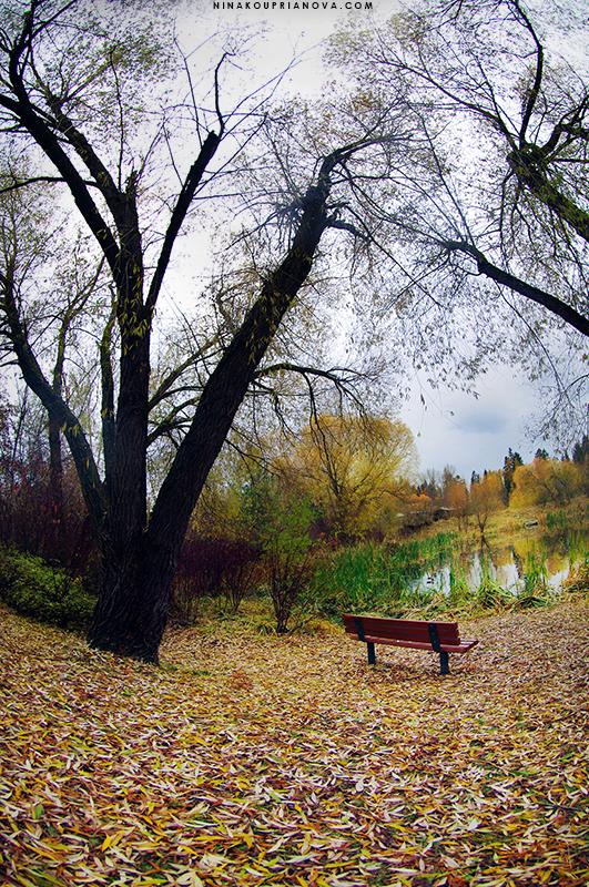 bench solitude 800 px url.jpg