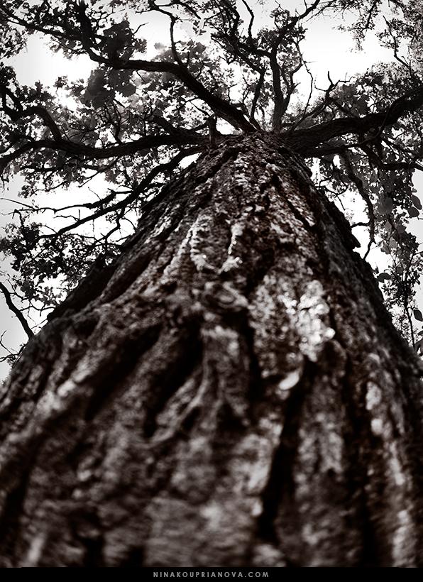 oak duotone 2 url.jpg