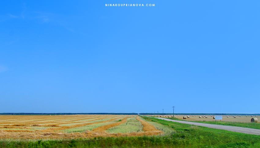 prairie 6 850 px url.jpg