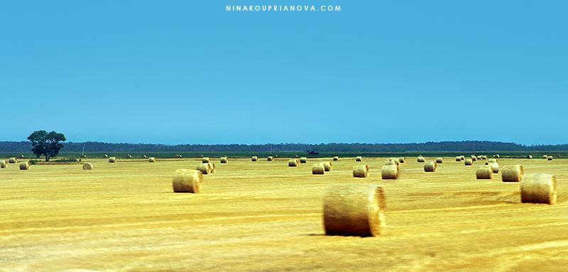 prairie 4 cropped 800 px url.jpg
