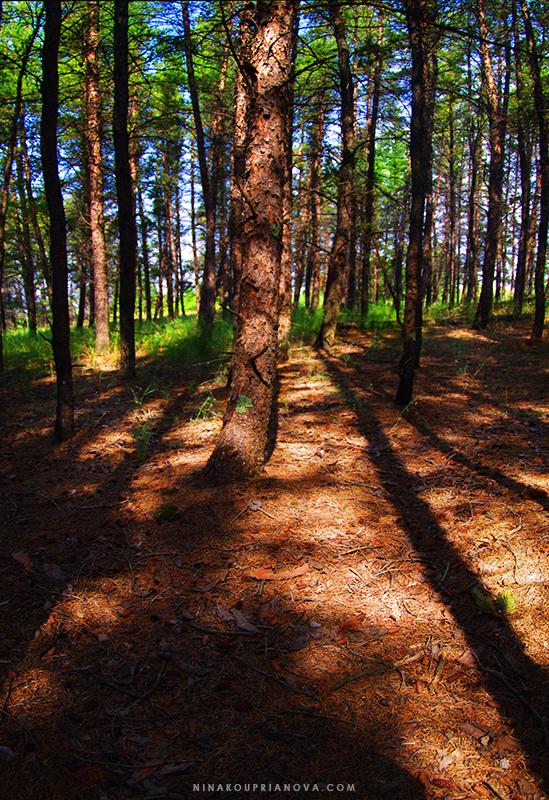 forest wooden 800 px url.jpg