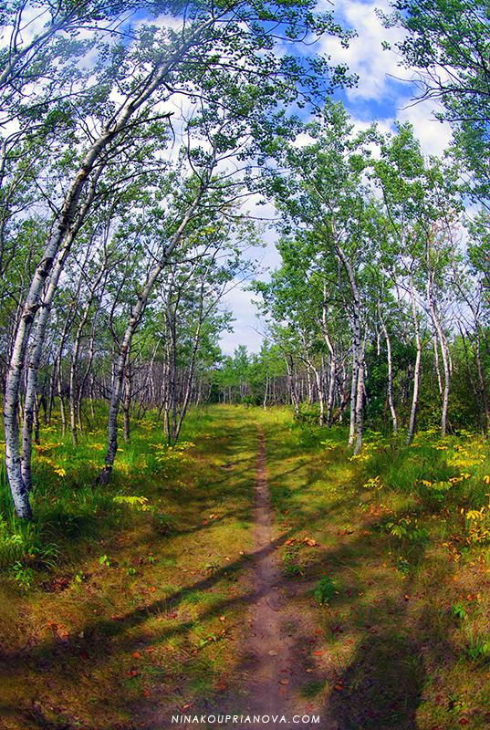 aspen grove birds hill 800 px url.jpg