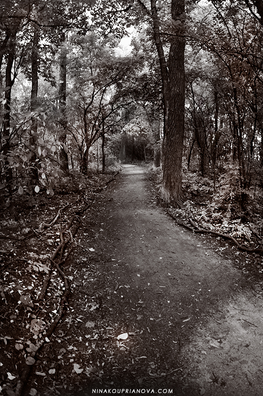 path in the woods duo 800 px url.jpg
