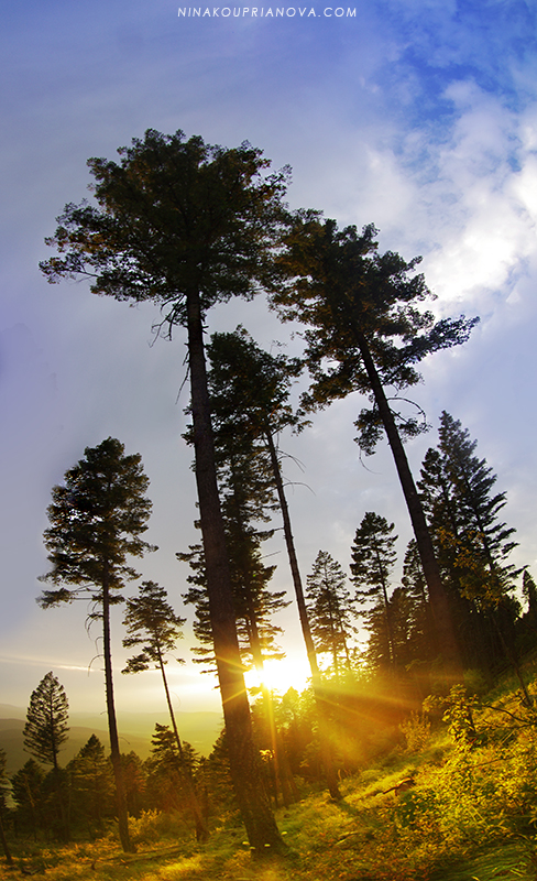 sunset sep 2 trees 800 px url.jpg