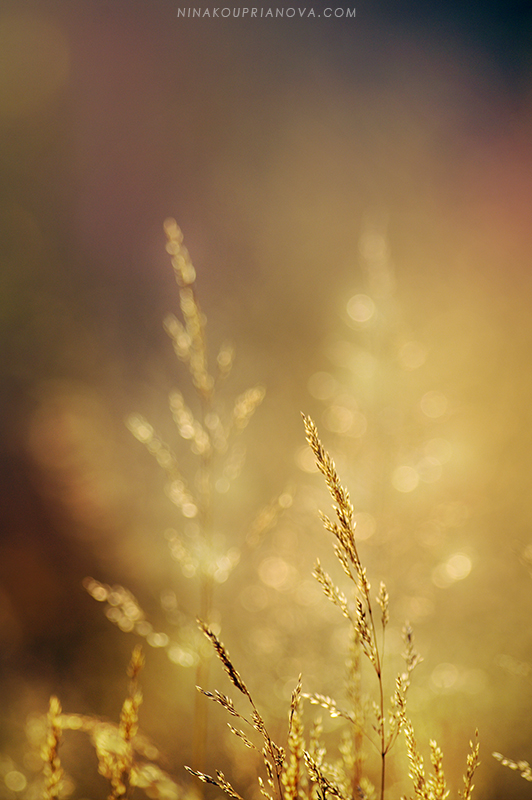 autumn golden hour 1 800 px url.jpg