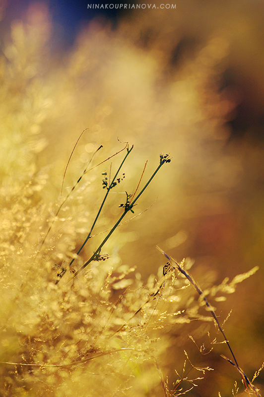 autumn golden hour 4 800 px url.jpg