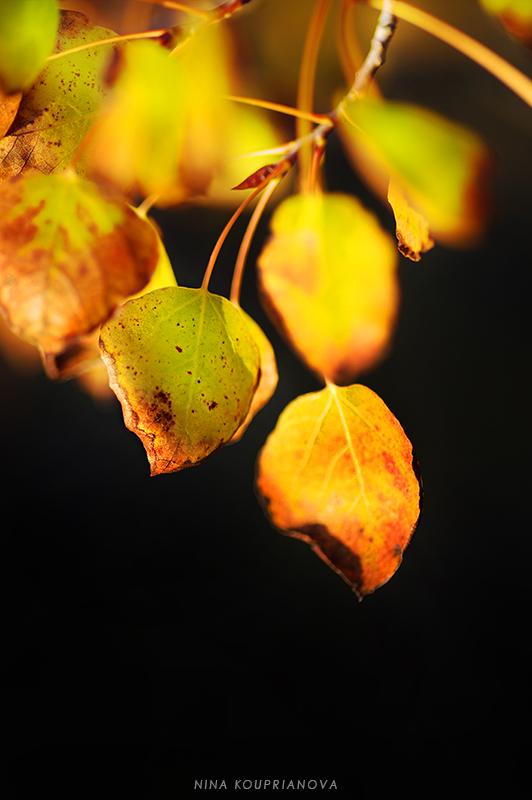 aspen autumn 3 800 px url.jpg