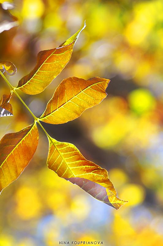 golden autumn 1 800 px url.jpg
