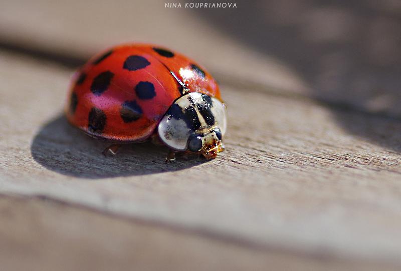 lady bug on wood v2 800 url.jpg
