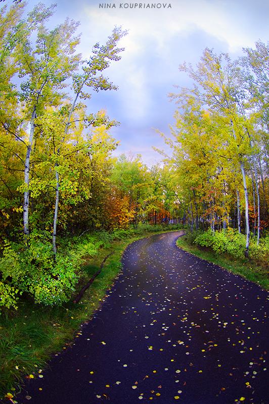 rain walk 1 800 px url.jpg
