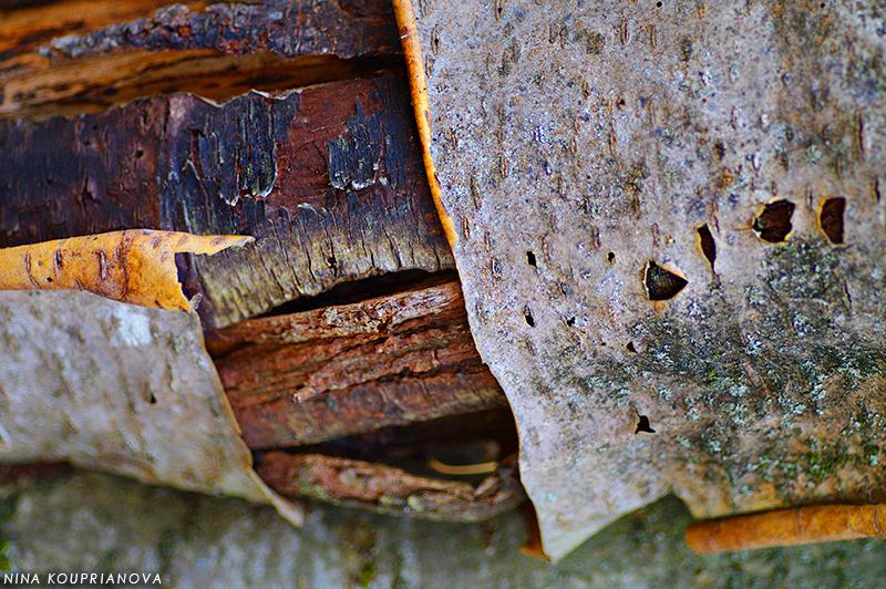 bark 800 px url.jpg