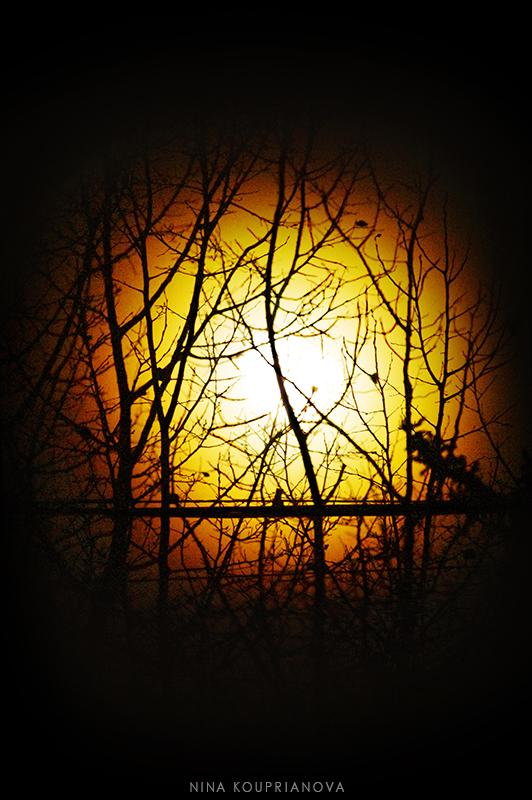moon rainbow trees 1 b 800 px url.jpg