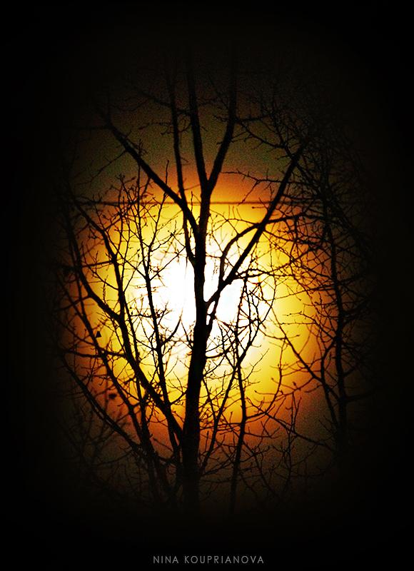 moon rainbow trees 2 800 px url.jpg