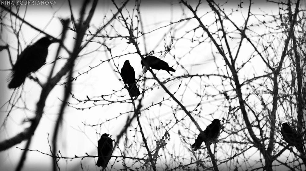 bird tree 2 1000 px url.jpg