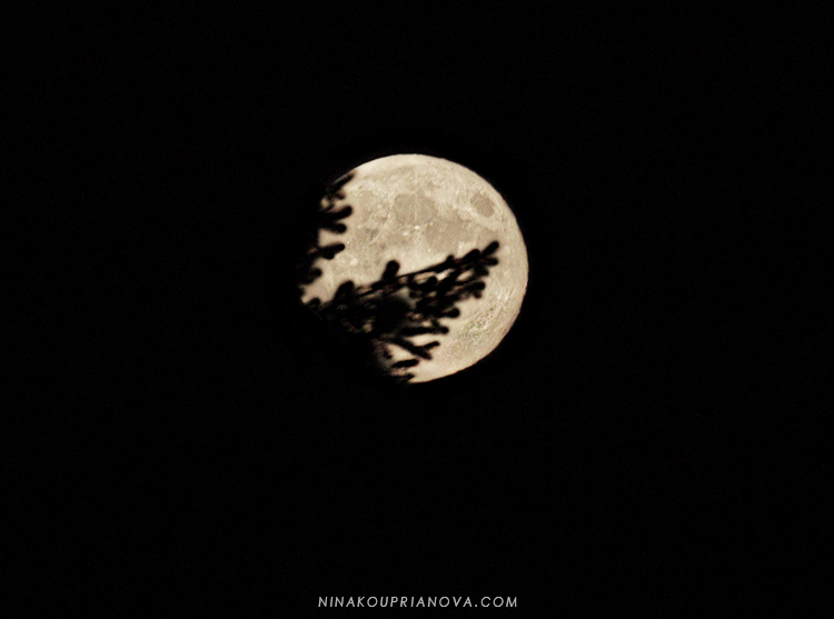 moon through the trees 750 px url.jpg