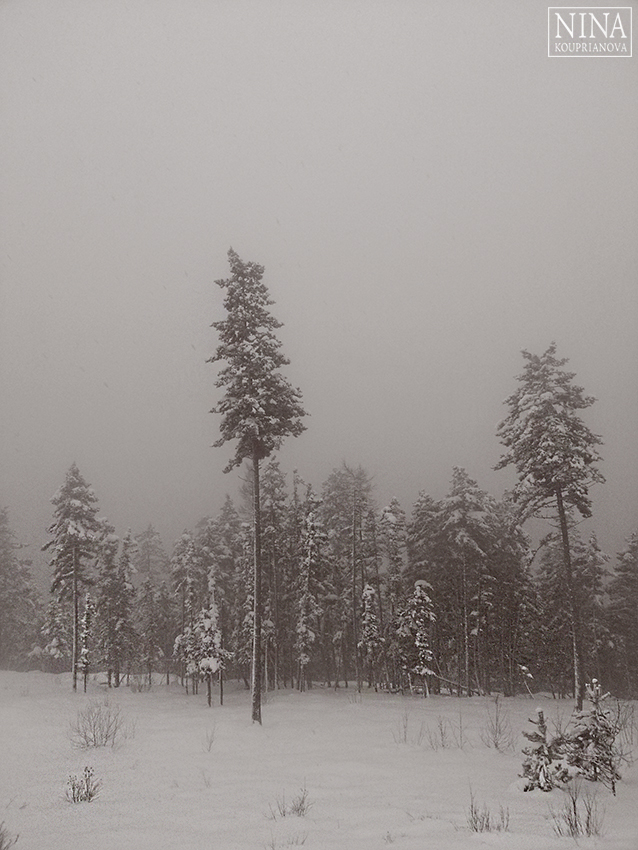deep snow 5 850 px url.jpg