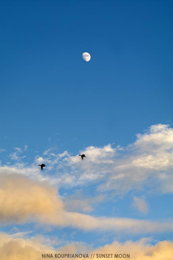 moon and birds 850 px url.jpg