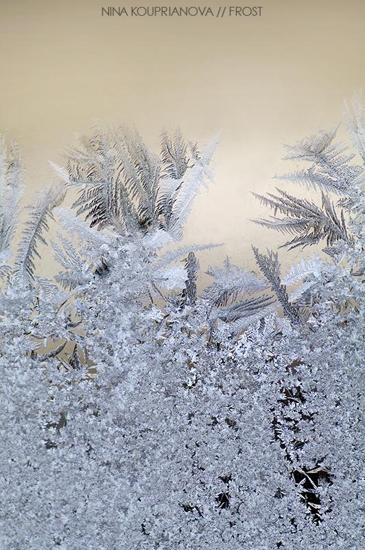 frost 2 800 px url.jpg