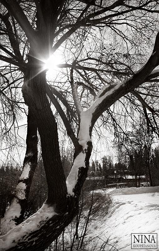 trees and sun 800 px url.jpg
