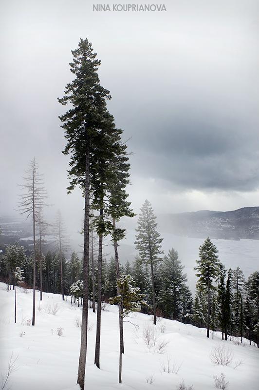 mountain winter gray 1 800 px url.jpg