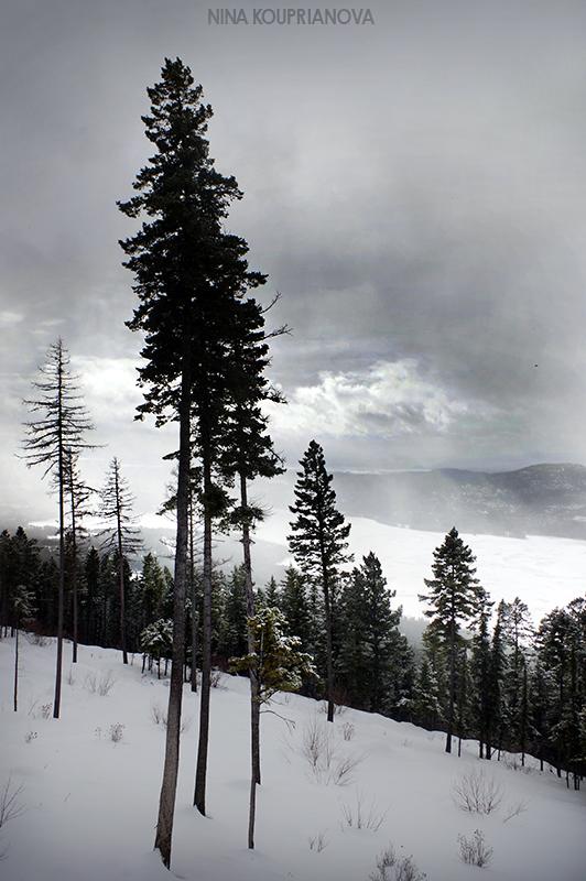 mountain winter gray 2 800 px url.jpg