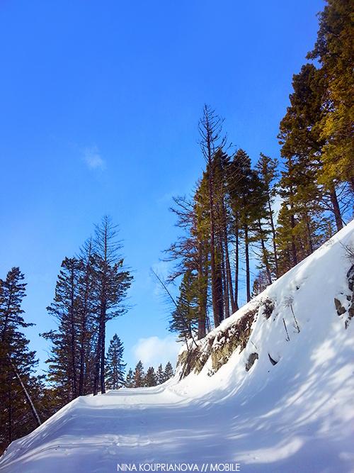 ski landscape 500w px url.jpg
