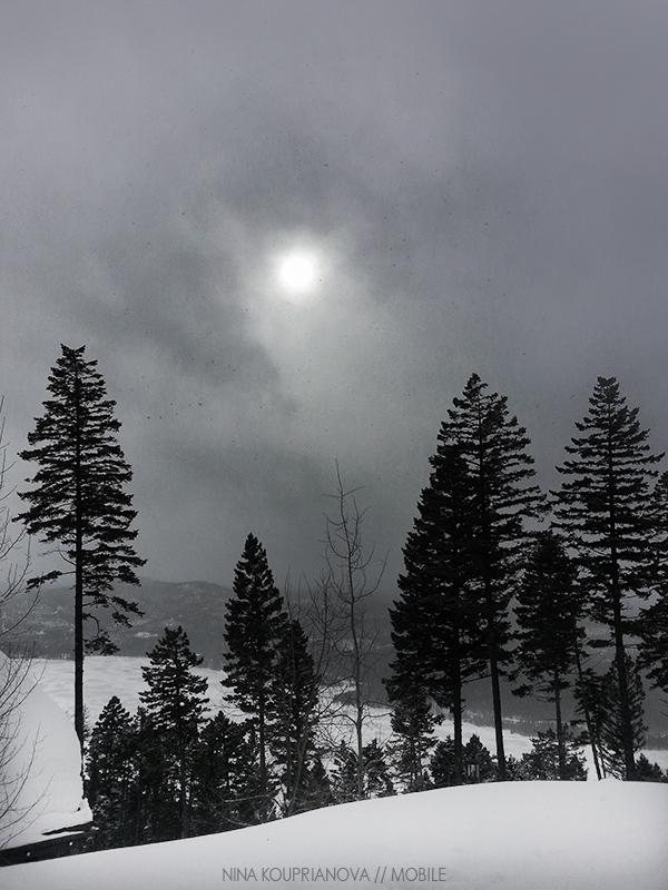 snow fog feb 2 800 px url.jpg