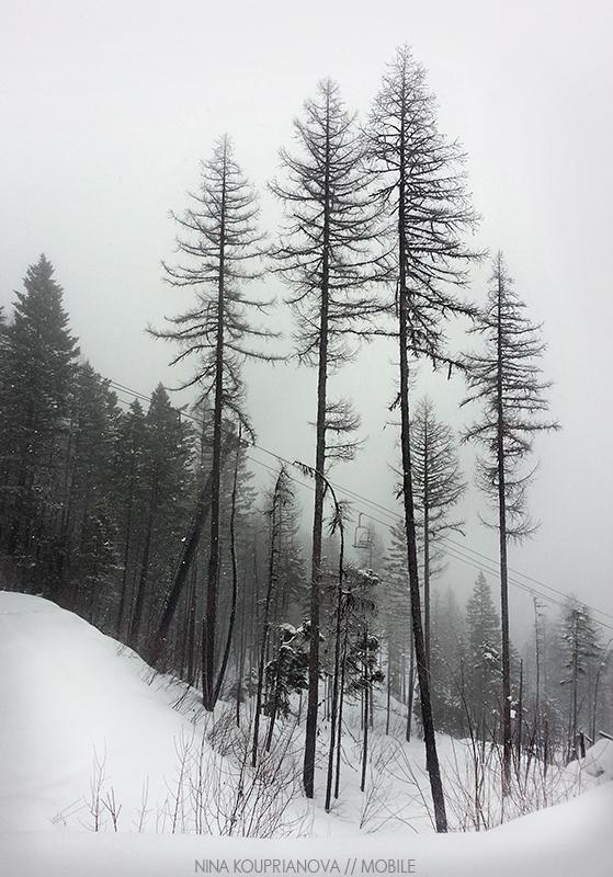 snow fog feb 8 800 px url.jpg