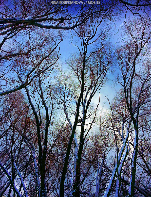 trees on blue 800 px url.jpg