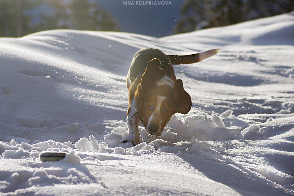 roediger snow game 3 1000 px url.jpg