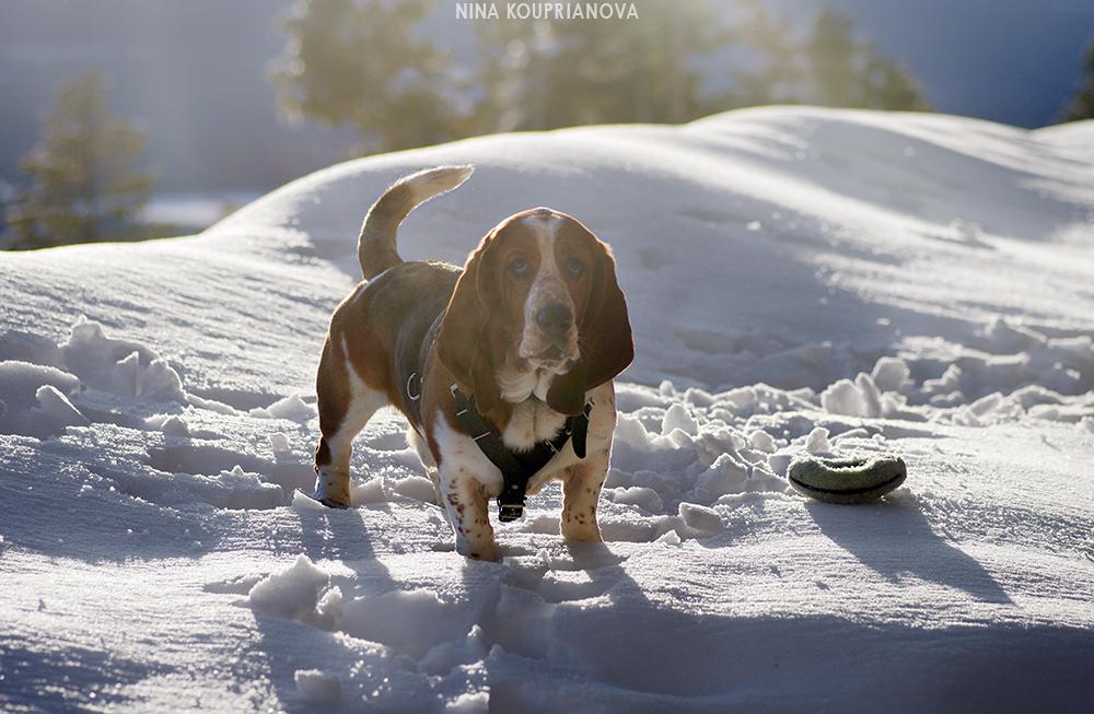 roediger snow game 5 1000 px url.jpg