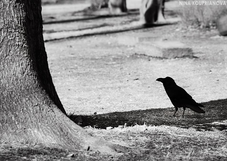 raven ueno black and white 950 px url.jpg