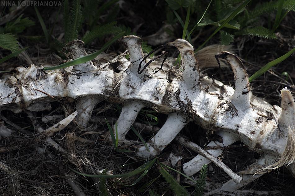 spine in grass 950 px url.jpg