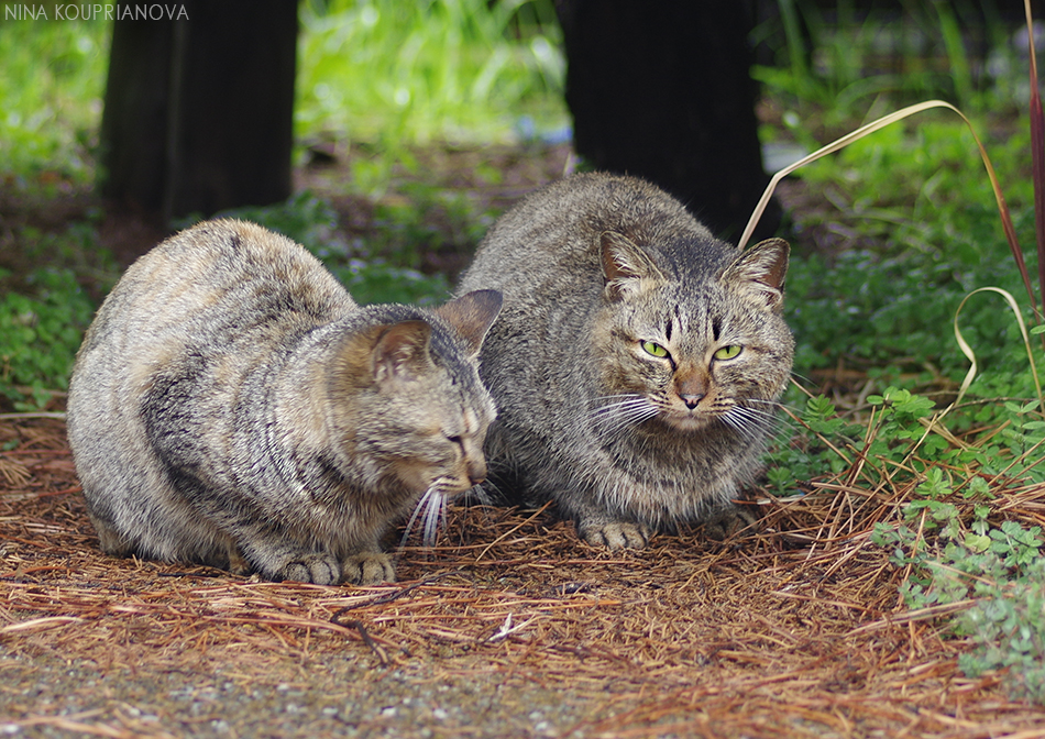 japanese cats 3 950 px url.jpg