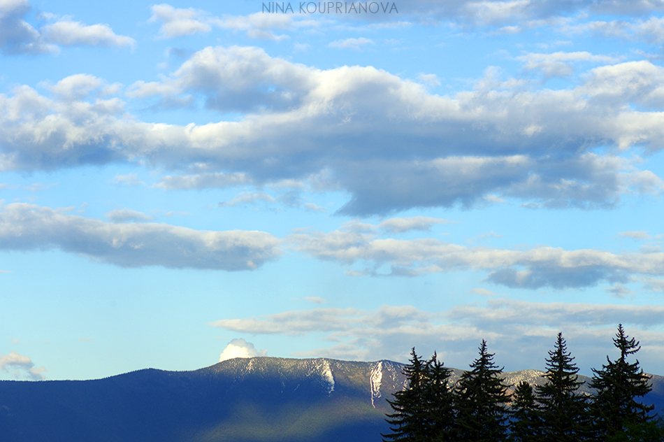 mountains and trees 950 px url.jpg
