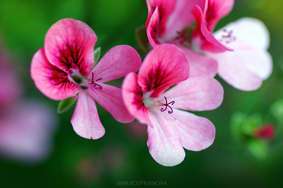 flowers in pink 1100 px url.jpg