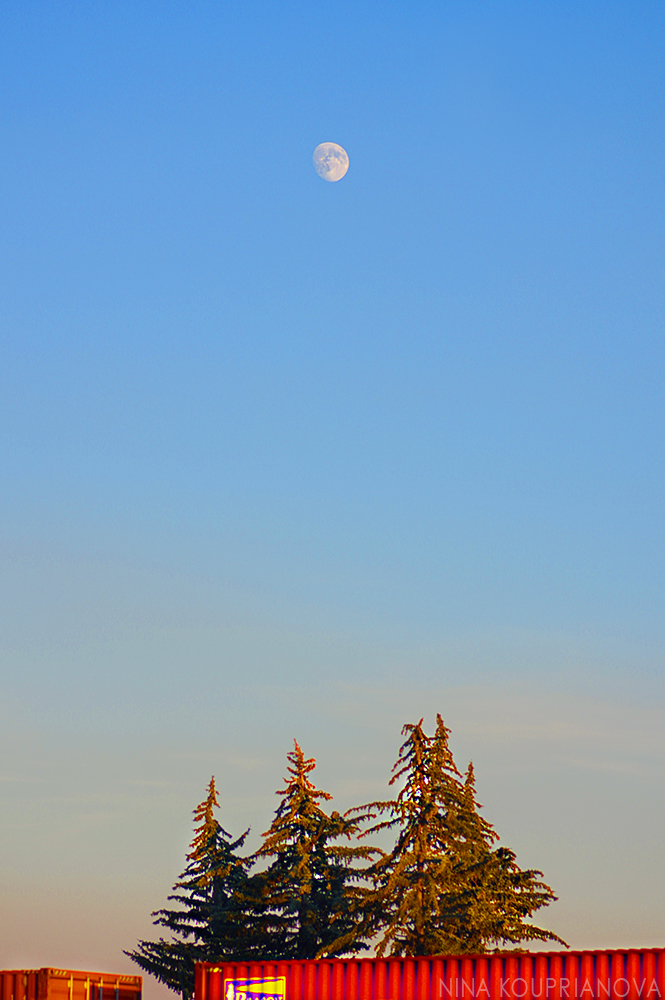 fir three and moon 1000 px url.jpg