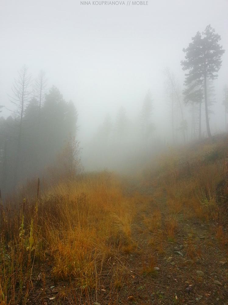 fog oct 5 1000 px.jpg