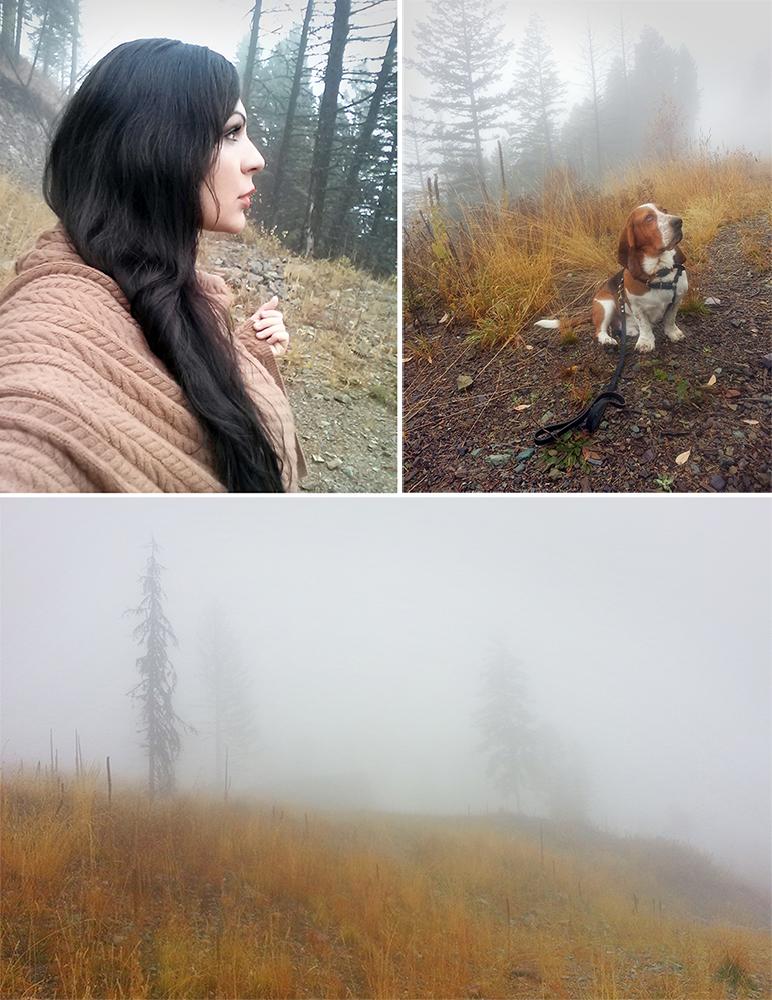 fog oct combined 1000 px.jpg