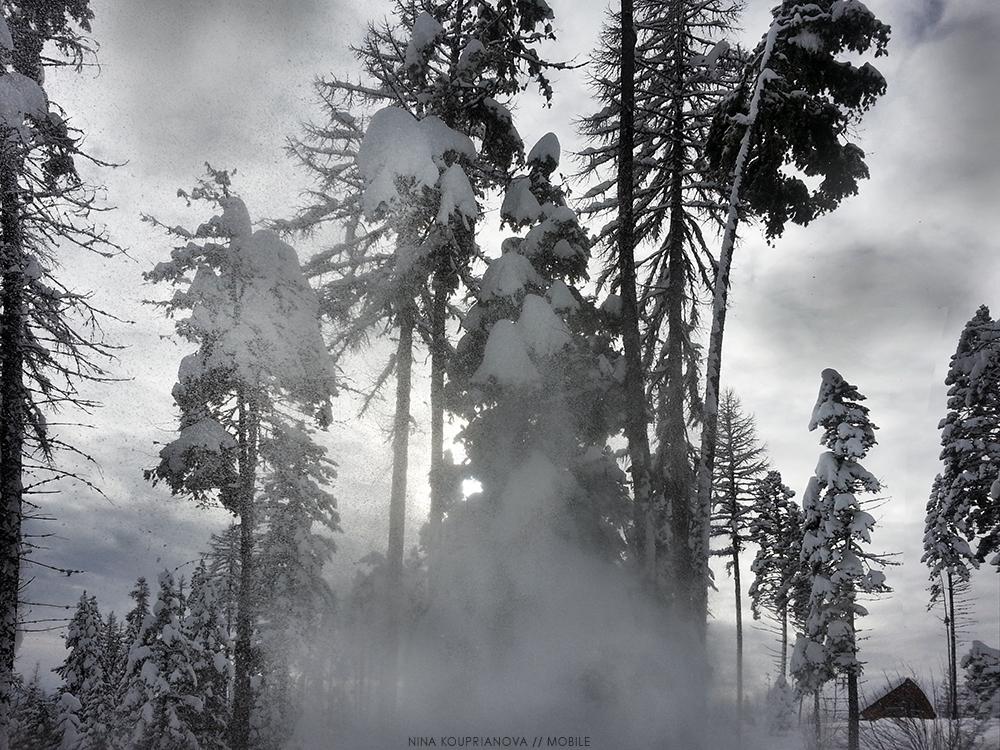snow fall 1 1000 px.jpg