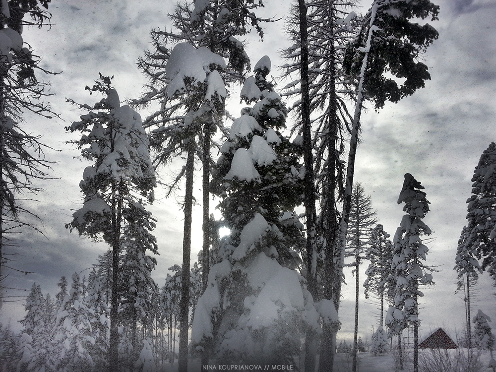 snow fall 2 1000 px.jpg