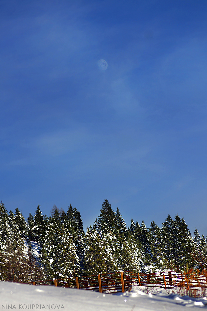 moon over forest 1000 px.jpg
