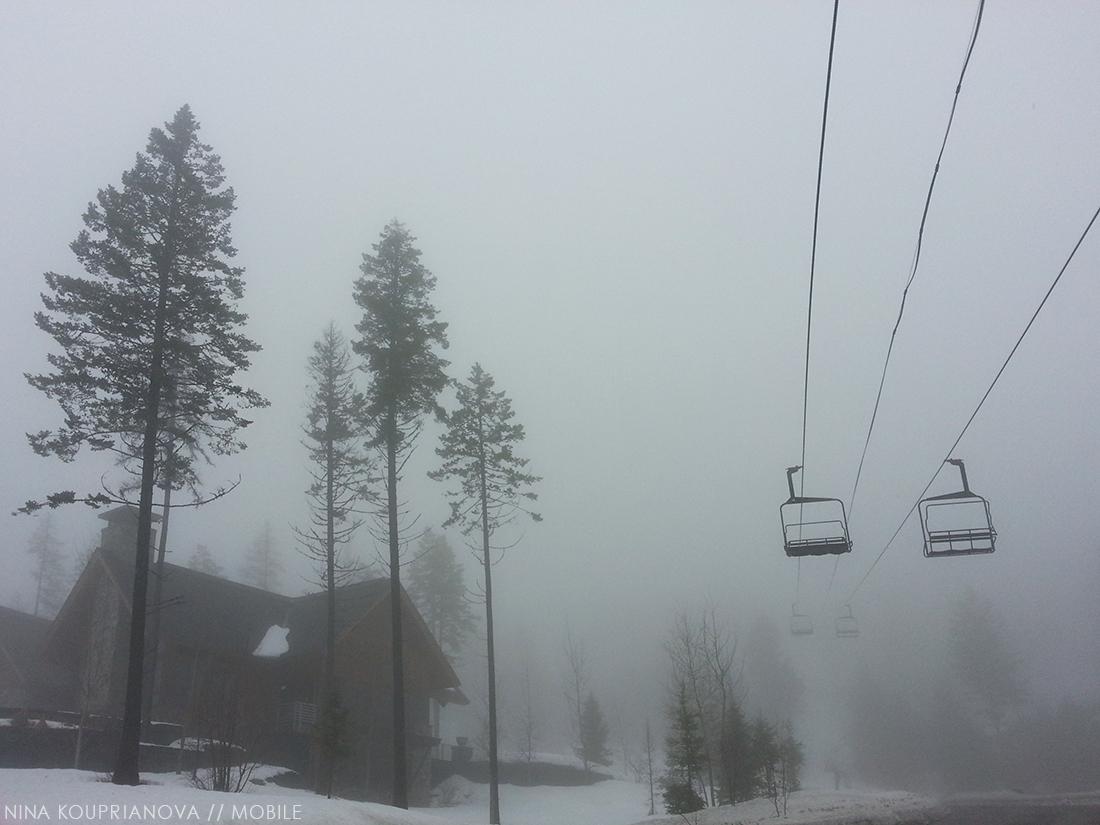 fog feb 1 1100 px.jpg
