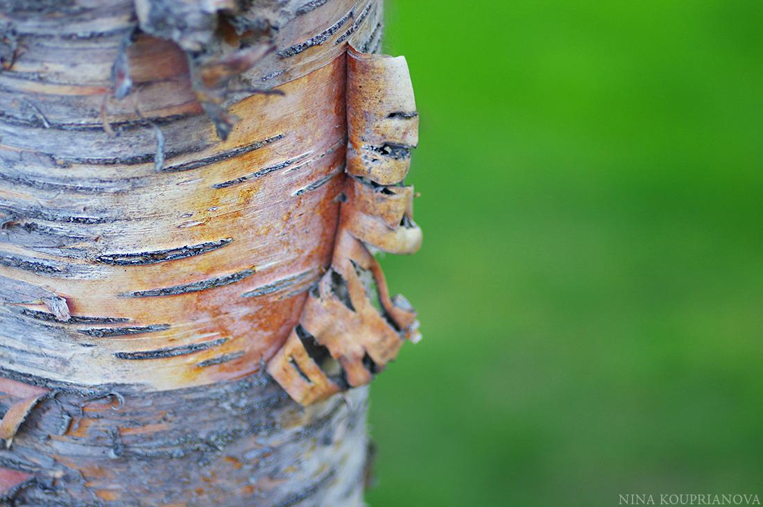 tree bark 2015 1100 px.jpg